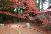 2011福壽山農場~楓景變裝秀:1051285039.jpg