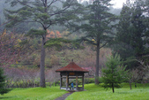 2012武陵冬景~楓葉紅銀杏黃:1305735541.jpg