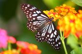蝴蝶真美麗:1677431251.jpg