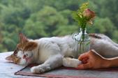尖石紅薔薇景觀花園餐廳:1278325573.jpg