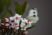2012與春天有約~台北植物園:1426725638.jpg