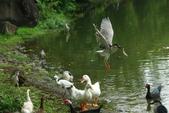 飛鳥練拍~大安森林公園:v 042.JPG