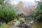 2012武陵冬景~楓葉紅銀杏黃:1305735517.jpg