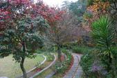 2012武陵冬景~楓葉紅銀杏黃:1305735488.jpg