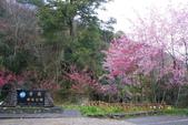 2012武陵農場賞櫻:1837845735.jpg