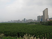 八里左岸_紅樹林:IMG_0051.JPG