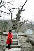 20160402_櫪木縣~長野縣:20160402_018_那須溫泉神社.jpg