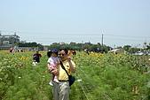20090530_麥當勞大興店_向陽農場:向陽農場_002.JPG