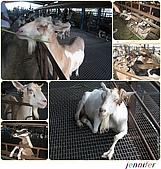 宜蘭3日遊:cats-18 宜農牧場1.jpg
