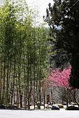 武陵櫻花:IMG_4672.jpg