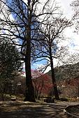 武陵櫻花:IMG_4703.jpg