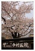 2018 東北賞櫻行(2):IMG_2252.JPG