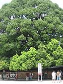2008 Aug-31 東京蜜月 day 3:看到這些大樹就知道這裡的歷史有多悠久啦