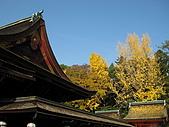 Kyoto 嵐山 (day 2):黃澄澄的楓葉