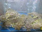 華西街之台南擔仔麵:超大瀨尿蝦