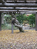 Kyoto 大原 (day 4):糾結老樹