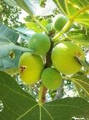來自大自然的水果和蔬菜:12189700_1677195079162230_6320753552953827200_n.jpg