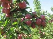來自大自然的水果和蔬菜:10422971_1677195172495554_3657709620210465486_n.jpg