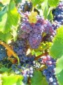來自大自然的水果和蔬菜:11220812_1677194845828920_8020648845614596055_n.jpg