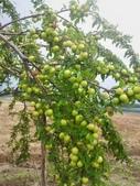 來自大自然的水果和蔬菜:12046787_1677194942495577_1370477458082896938_n.jpg