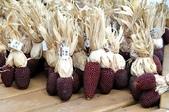 這是新品種草莓玉米:12191876_1482381768733970_6045482331680547011_n.jpg