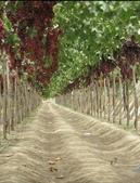 來自大自然的水果和蔬菜:11049532_1677194695828935_5015510978540059310_n.jpg