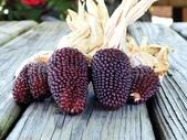 這是新品種草莓玉米:12193720_1482381612067319_6762447760739813967_n.jpg