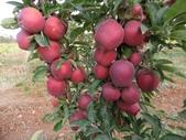 來自大自然的水果和蔬菜:12043163_1677195032495568_456810646955232329_n.jpg