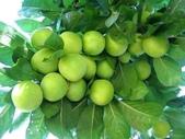 來自大自然的水果和蔬菜:12115533_1677194779162260_6144836783840708235_n.jpg