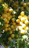 來自大自然的水果和蔬菜:12144868_1677194682495603_7552423261528566198_n.jpg