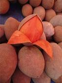 這些水果,哪怕您是一顆水果,先別說嘗,也許連見都未必見過這些奇異的水果!今天就給您長長見識吧!:3-曼密蘋果,原產地為南美洲,名為蘋果,實際上卻是一種莓果,果殼有有點厚,果肉柔軟香甜….jpg
