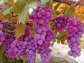 來自大自然的水果和蔬菜:11063671_1677195142495557_4373872625956258983_n.jpg