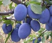 來自大自然的水果和蔬菜:12049316_1677195119162226_2990579542681914593_n.jpg