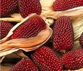 這是新品種草莓玉米:12191827_1482381268734020_8064752906063968624_n.jpg