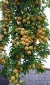 來自大自然的水果和蔬菜:11221519_1677194629162275_7641779956057200487_n.jpg