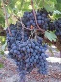 來自大自然的水果和蔬菜:11752430_1677195219162216_1343223324850658467_n.jpg