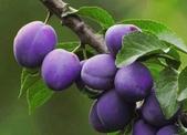 來自大自然的水果和蔬菜:11204864_1677195155828889_5710549593387936031_n.jpg