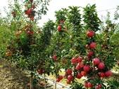來自大自然的水果和蔬菜:11220798_1677195195828885_2786344150670925812_n.jpg