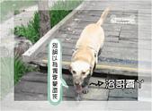 驛棧香草餐廳狗聚:06-1