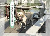 驛棧香草餐廳狗聚:09