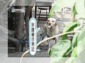 驛棧香草餐廳狗聚:11