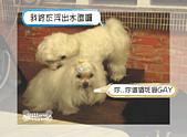 驛棧香草餐廳狗聚:15