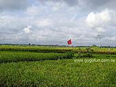 [活動] 峇里烏布單車遊梯田:田野風光