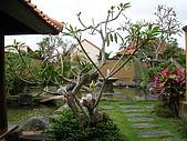 [Villa] Nyuh Gading Villas:DSCN4503