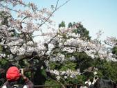 2014阿里山櫻花:2014蘭展 018.jpg