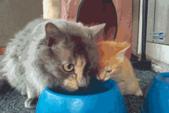 fau:猫妈妈教小猫喝水1.gif
