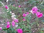 澄清湖的浪漫玫瑰花(蘭花):20200202_173226.jpg