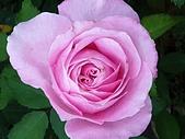 澄清湖的浪漫玫瑰花(蘭花):20200202_174426.jpg