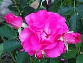 澄清湖的浪漫玫瑰花(蘭花):20200202_173931.jpg