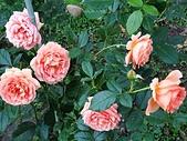 澄清湖的浪漫玫瑰花(蘭花):20200202_174115.jpg